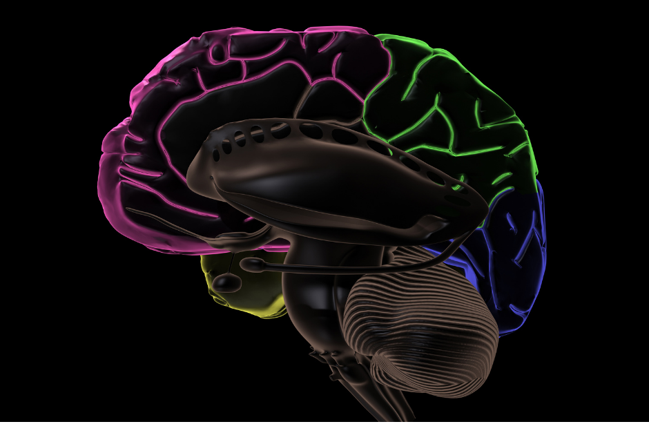 Attachment and the Developing Brain
